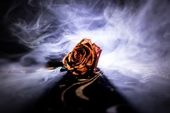 A wilting rose signifies lost love, divorce, or a bad relationship, dead rose on dark background with smoke. Selective focus stock photography