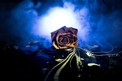 A wilting rose signifies lost love, divorce, or a bad relationship, dead rose on dark background with smoke. Selective focus stock image