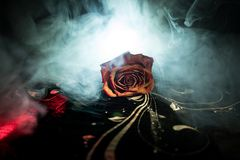 A wilting rose signifies lost love, divorce, or a bad relationship, dead rose on dark background with smoke. Selective focus stock photos