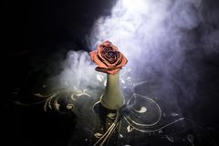 A wilting rose signifies lost love, divorce, or a bad relationship, dead rose on dark background with smoke. Selective focus royalty free stock photos