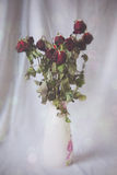 Wilting roses in vase. Wilting red roses in white patterned vase Royalty Free Stock Images