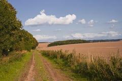 Wiltshire-Landschaft Stockfoto