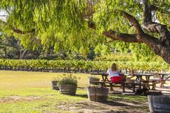 Wilyabrup, Margaret River, Western Australia - 2011: A lady enjoying wine at Cullen winery stock photography