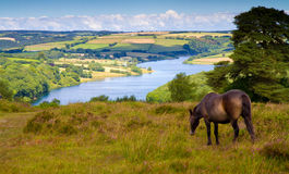 Wimbleball Lake Exmoor National Park Somerset. An Exmoor pony and Wimbleball Lake Exmoor National Park Somerset.  It is well known for its activity centre and is Stock Photography