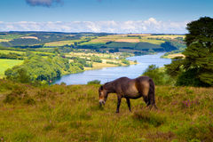 Wimbleball Lake Exmoor National Park Somerset. An Exmoor pony and Wimbleball Lake Exmoor National Park Somerset.  It is well known for its activity centre and is Royalty Free Stock Photography