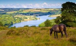 Wimbleball LakeExmoor nationalpark Somerset Arkivbild