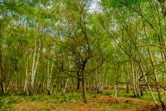 Wimbledon błonie Wood-2 zdjęcie royalty free