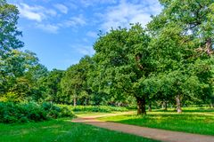 Richmond-Park Path. Footpath in Richmond park in summer, London England U.K stock photography