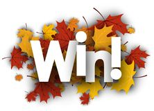 Win background with maple leaves. Stock Images