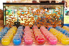 Goldfish game at a carnival fair Royalty Free Stock Image