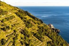Win pola blisko morza śródziemnomorskiego przy Cinque Terre wioską w Włochy obrazy royalty free