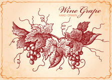 Win winogron rocznika stylu ilustracja Ilustracja Wektor