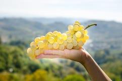 Win winogrona w ręce Fotografia Stock
