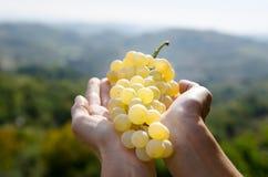 Win winogrona w ręce Obrazy Royalty Free