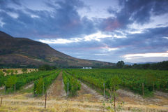 Wina gospodarstwo rolne, Stellenbosch.South Afryka Zdjęcie Royalty Free