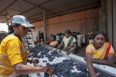Wina robić proces z czerwonymi winogronami Fotografia Royalty Free