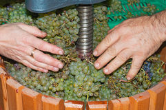 Wina robić proces z ręczną gronowego miażdżenia maszyną Zdjęcie Stock