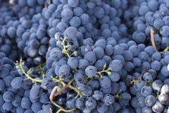 wina winogrona Zdjęcia Royalty Free