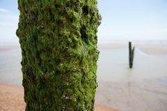Winchelsea Англия свободного полета погоды пляжа стоковая фотография