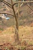 Wind Stockfoto