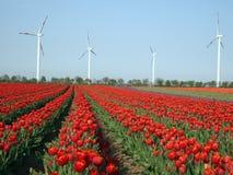 Wind als afwisselende energiebron Stock Foto
