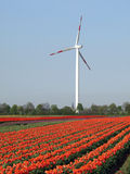 Wind as an alternate energy resource. Single wind wheel behind a tulip field Stock Photo