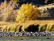 Wind auf Gras u. Fluss lizenzfreies stockfoto