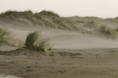 Wind on the beach. Wind is rushing over the beach. Selective focus on the grass stock photo