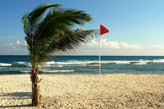 Wind in the beach Royalty Free Stock Photos