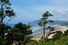 Wind bent trees, Oregon coast Royalty Free Stock Photos