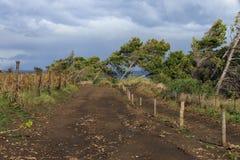 Wind-bent trees Stock Image