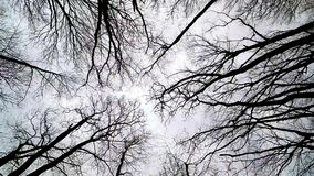Wind bewegt Niederlassungen stock video