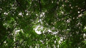 Wind bewegt Niederlassungen im Wald stock footage