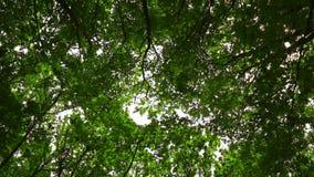 Wind bewegt Niederlassungen im Wald stock video footage