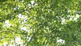 Wind blazende bladeren van een boom Royalty-vrije Stock Afbeelding