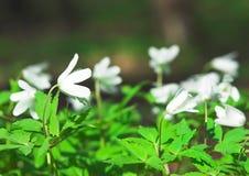 Wind-bloem stock foto