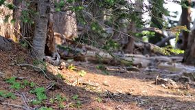Wind blowing through the branches of a summer mountain side in Washington. State stock video