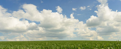 Wind blowing over wheat crop Royalty Free Stock Images
