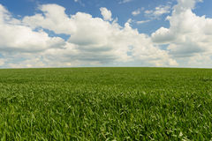 Wind blowing over wheat crop Stock Photo