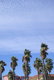 Wind blowing palm trees Royalty Free Stock Photography