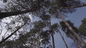 Wind blowing and rustling tree branches in the forest. Static camera stock video