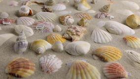 Wind blowing on the sand and opening seashells stock video footage