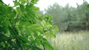 Wind blowing vibrant green leaves stock video footage