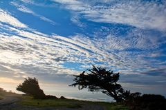 Windy Ocean Bluff. Wind blown cypress tress along the Pacific Ocean on Table Bluff near Eureka, California in late afternoon royalty free stock photo