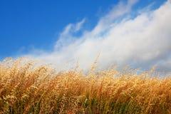 Wind-blown Gras en Mist Royalty-vrije Stock Afbeeldingen