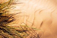 Wind blown grass on sand dun. E stock photography