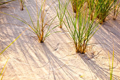 Wind blown grass on sand dune Stock Photos
