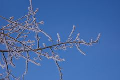 Wind blown ice on tree against blue sky in winter Stock Images