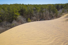 Wind-Blown Sand Dune Moving over Pine Forest Royalty Free Stock Photography