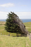 Wind blown tree Stock Photo